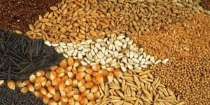 جلسه معاون اول رئیس جمهور درباره خوراک دام و طیور/ 500هزار تن کنجاله خریداری و توزیع می شود